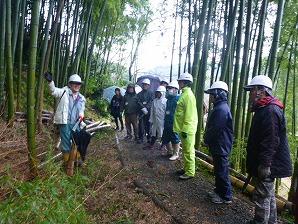 竹伐採の説明